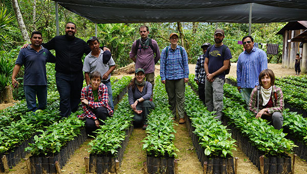 Staff visiting a coffee plant nursery