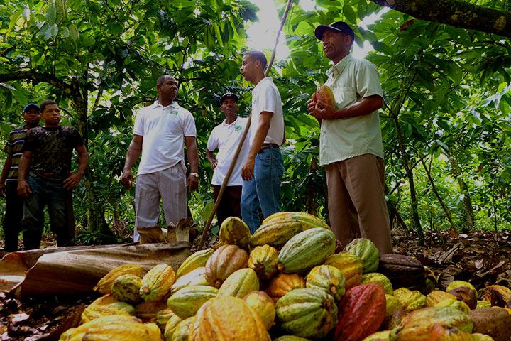 cacao farmers