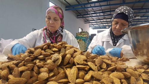Sorting through Almonds