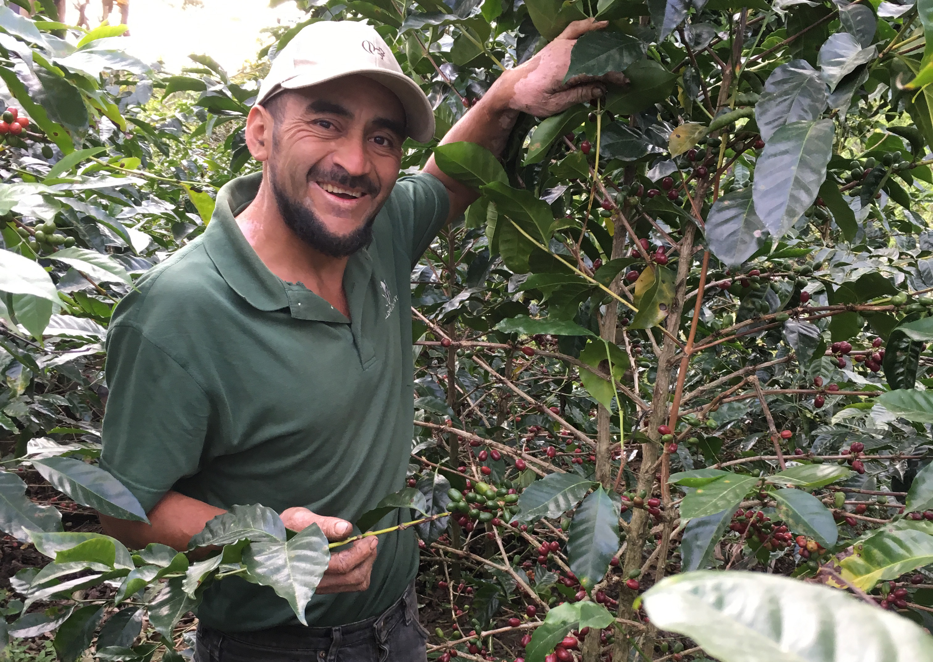 Edwin Contreras of COMSA shows off one of his favorite plants on his farm. Edwin is one of the leaders of COMSA's experimental project in varietal recovery funded through the collaborative.