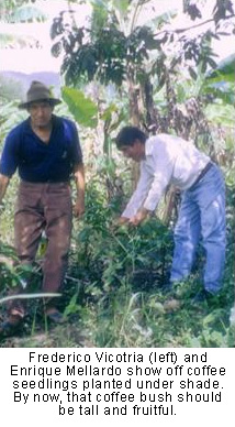 Frederico Victoria and Enrique Mellardo show off coffee seedlings