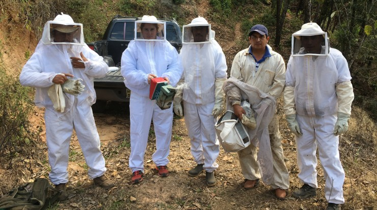 Beekeeping at Triunfo Verde in Mexico