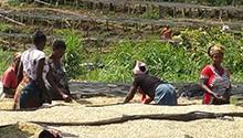Organic Congo Rising
