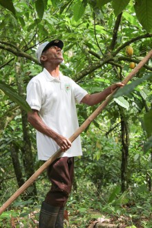 Dominican Cacao Farmer