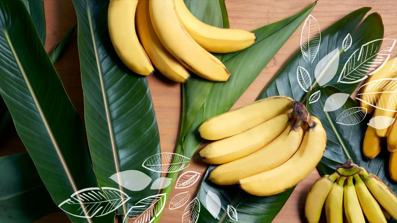 Fair Trade Bananas | Equal Exchange