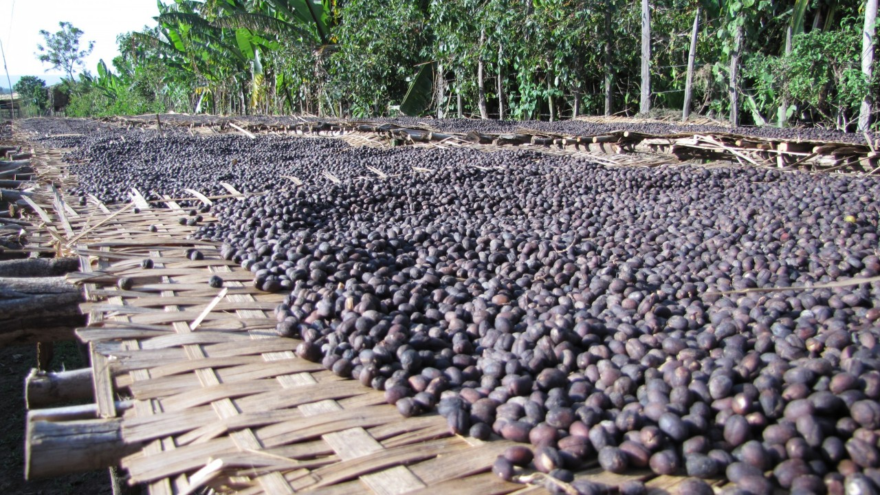 Ethiopia drying bed