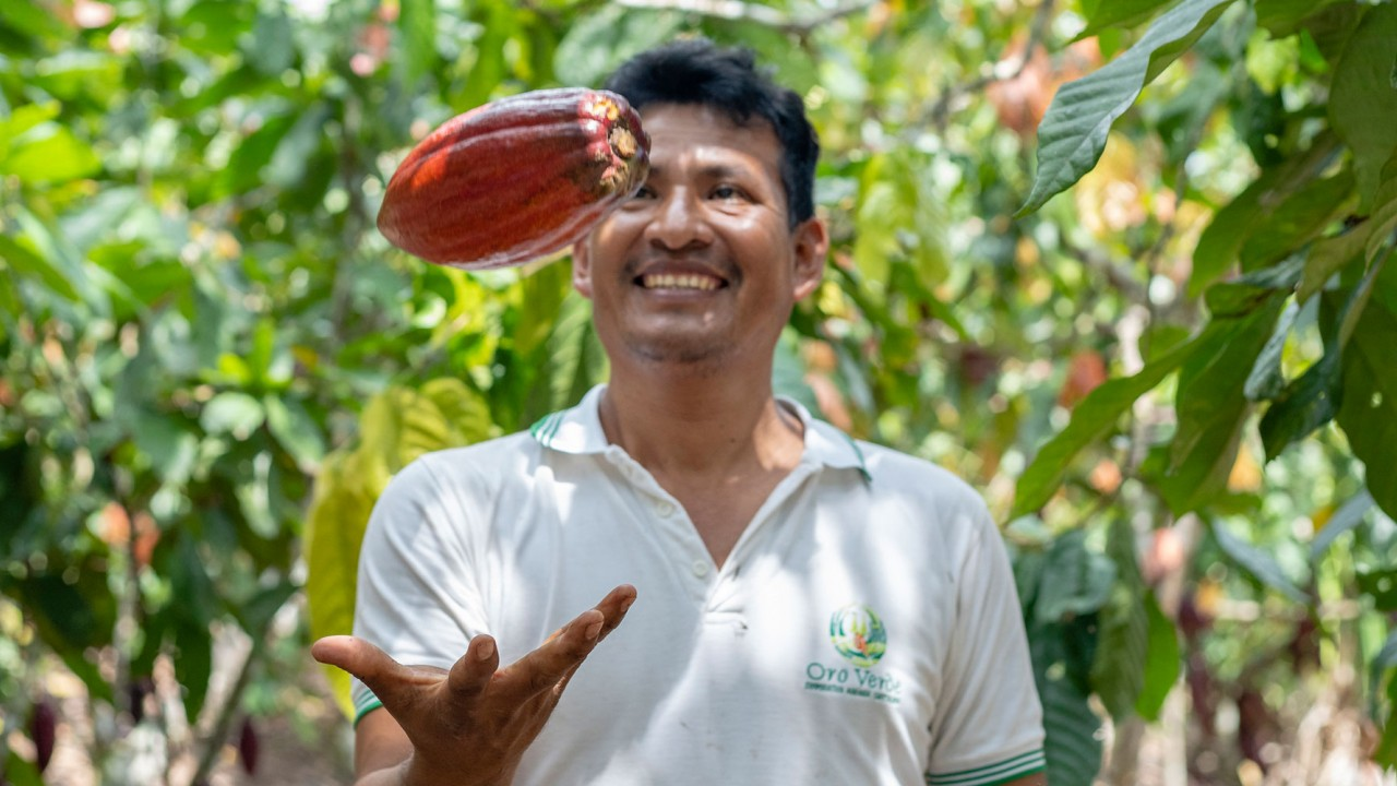 Man tossing a cacao pod