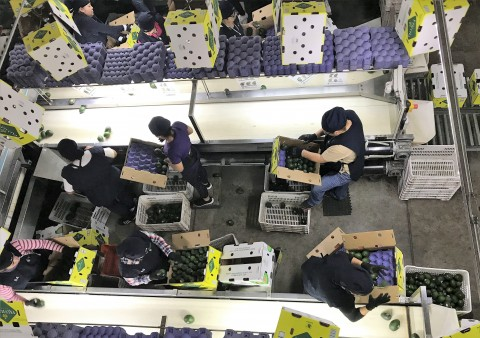 Avocado Warehouse