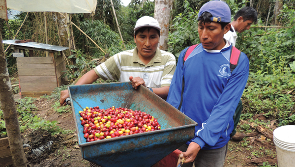 Two coffee farmers in Puno, Peru standing by a depulper filled with coffee cherries.